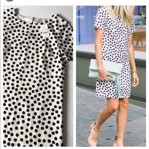 Jcrew navy polka dot dress